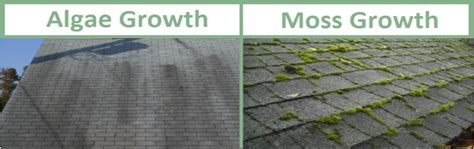 Best Ways To Prevent Roof Best Ways To Prevent Roof Stains From Algae And Moss David Hazen