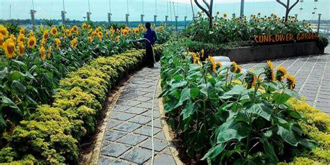 As Matahari Gardan 12 T Viar Roda Tiga Garden Hopping Jelajah Taman Cantik Di Changi Airport Yuk