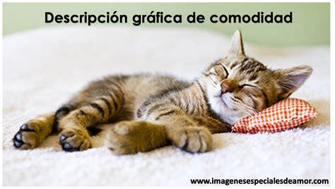 imagenes tiernas de gatos gatos tiernos con frases imagenes especiales de amor
