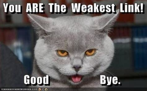 Goodbye Cat Meme - image 48174 you are the weakest link goodbye