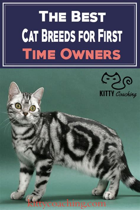 breeds for time owners the best cat breeds for time owners 2018