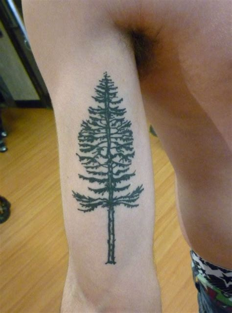 douglas fir tattoo douglas fir by ximena yelp