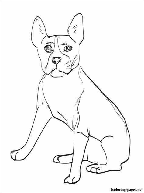 boston terrier coloring pages coloring home