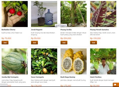 Jual Bibit Markisa Di Jakarta kebunbibit jual bibit tanaman buah