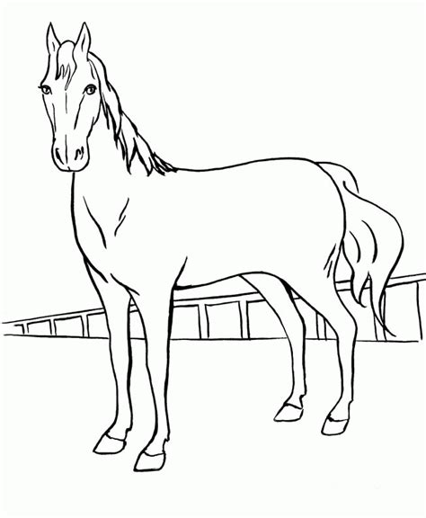 horse coloring pages pdf horse coloring pages pdf driverlayer search engine
