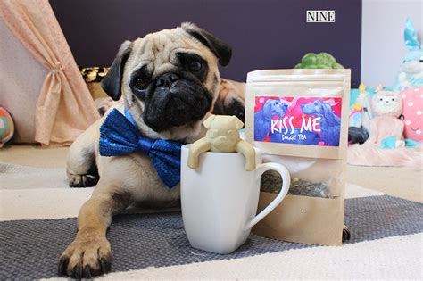 pug guide 2017 gift guide for pugs the foodie the pug diary