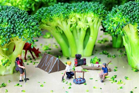 Tiny House Company camping among broccoli jungles miniature art photograph by