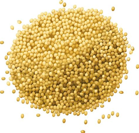 millet definition from answers com