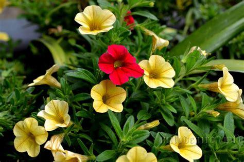 fiori estivi piccoli fiori estivi