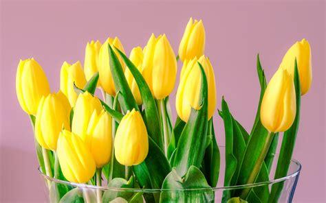 sfondi desktop fiori primavera scarica sfondi tulipani gialli rosa sfondo primavera