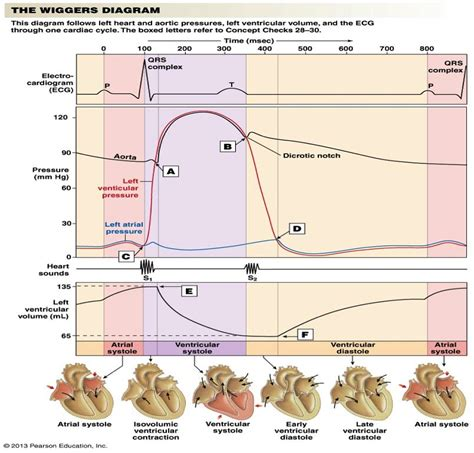 what is the er diagram wiggers diagrams printable diagram