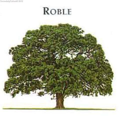 imagenes realistas de un arbol 193 rbol roble sociedad y cultura