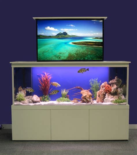 aquarium design kolkata how to design aquarium in home photo design aquarium