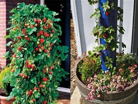 Vertical Strawberry Planter by How To Make A Vertical Strawberry Planter Home