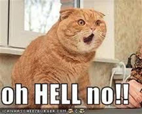 Hell No Meme - hell cat rental autos post