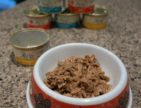 moist food muse recipes moist cat food ourkidsmom