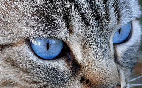 cat eyes wallpaper hd cat eyes wallpaper hd desktop wallpapers 4k hd