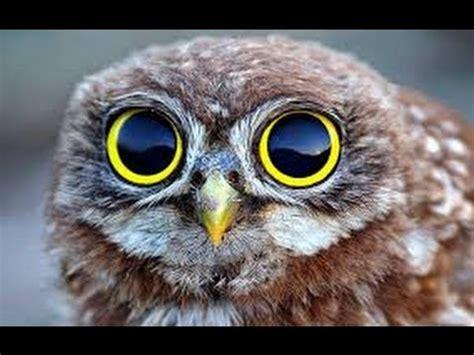 imagenes animales asombrosos documentales de animales animaes asombrosos documentales