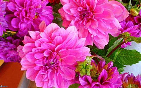 imagenes rosas color flores de color rosa