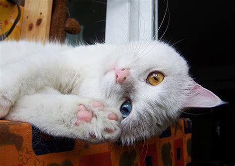 堪称史上最可爱最萌的猫星人新鲜出炉 可爱图片