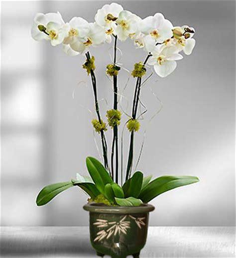 Harga Pot Anggrek Plastik toko bunga mawar jakarta barat florist indonesia