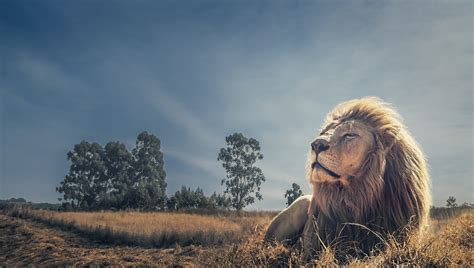 King Of The the king of jungle hdwallpaperfx
