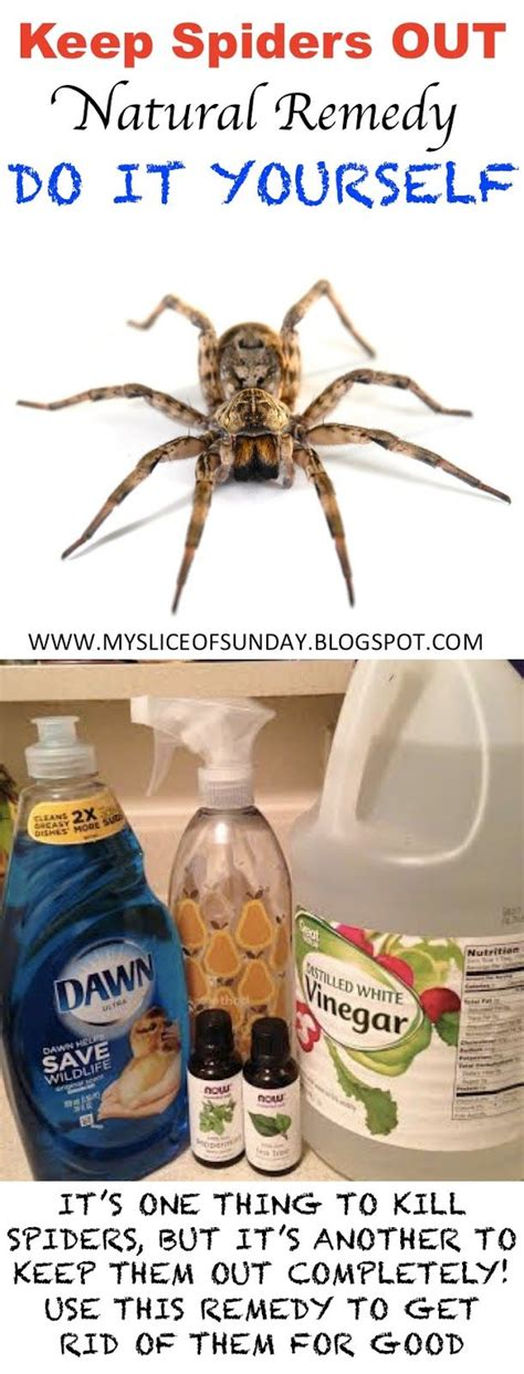 25 best ideas about spider spray on spider