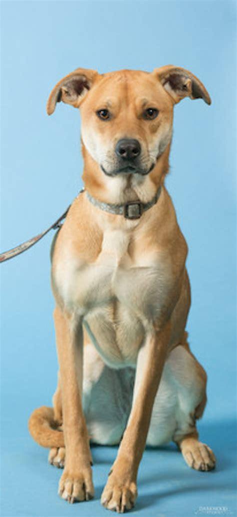 puppy adoption st louis adopt a st louis rescue gateway pet guardians