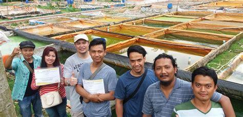 Bibit Lele Parung ternak lele sangkuriang menyelenggarakan pelatihan