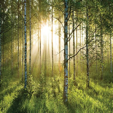 Wall Mural Forest 1 Wall Giant Wallpaper Mural Forest 3 15m X 2 32m