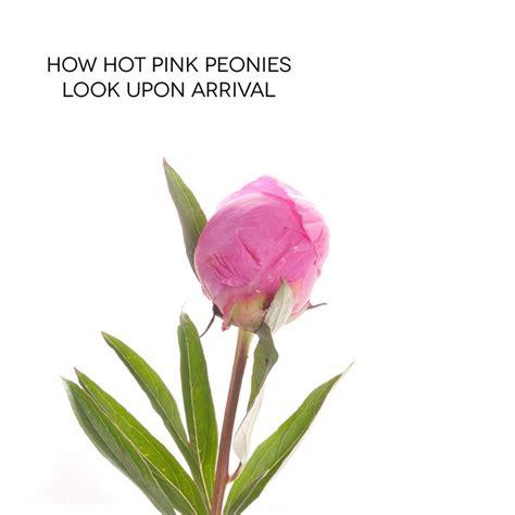 instagram pinkpeonies 100 instagram pinkpeonies pink peonies desk gold