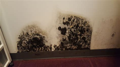 black mold images black mold vs asbestos the battle of toxic materials