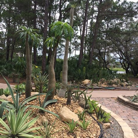 Psl Botanical Gardens Port St Botanical Gardens 12 Fotos Viveiros Jardinagem 2410 Se Westmoreland Blvd