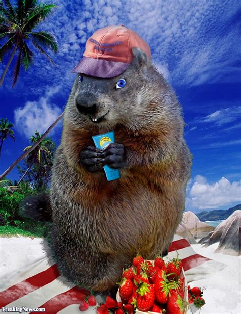 groundhog day killer groundhogs pictures gallery freaking news