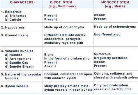 difference between monocot and dicot leaf cross section difference between dicot stem and monocot stem