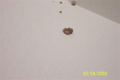Termites Drywall Paper by Termites Pictures Drywall