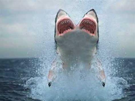 baby shark illuminati two headed shark youtube