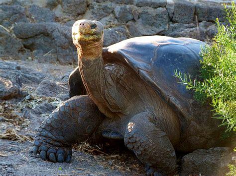 imagenes animales galapagos 10 especies animales que ver y fotografiar en gal 225 pagos