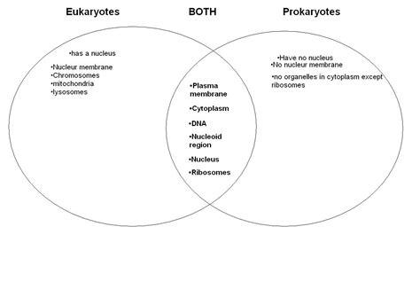 eukaryotic and prokaryotic venn diagram biologyforkids eukaryotes vs prokaryotes