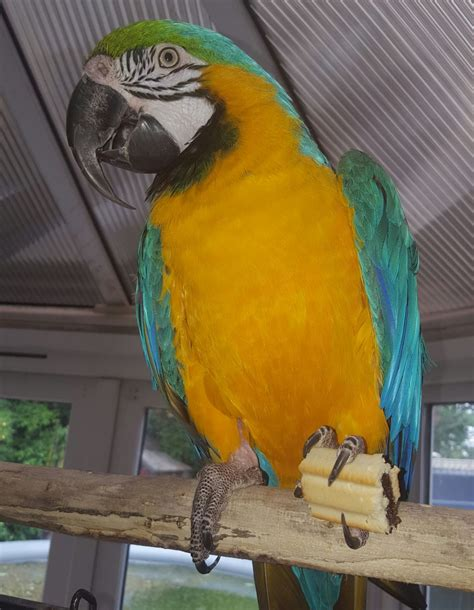 macaw birds for sale new york life insurance building
