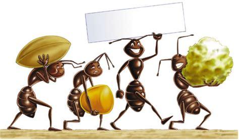 eliminare le formiche da casa eliminare le formiche da casa senza impazzire hton