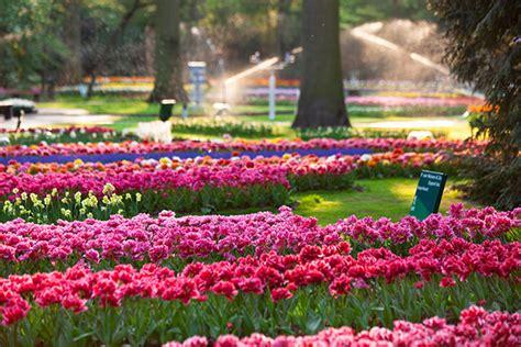 amsterdam flower garden fresh flowers scenic cities go ahead tours travel