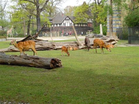 Zoologischer Garten Tiergarten by Tiergarten Zoo Picture Of Berlin Zoological Garden