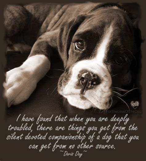 images of love dogs dog companionship quotes