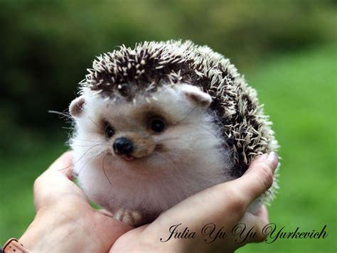 cute baby hedgehog smiling hedgehog smile bored panda