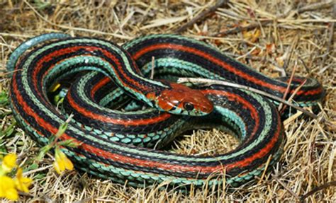 eliminating snakes in your yard the national wildlife