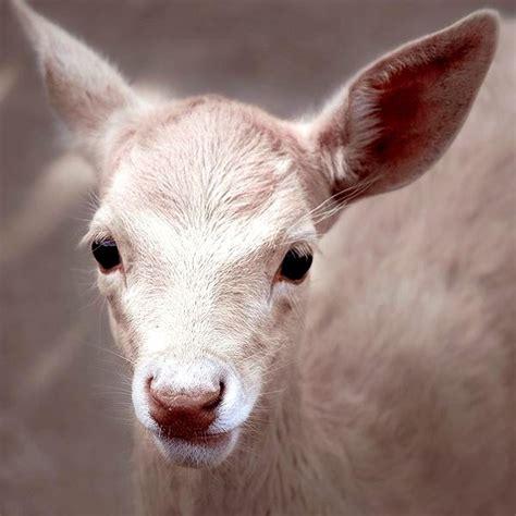 mutagenetix phenotypic mutation deer white discoloration on skin pale skin discoloration