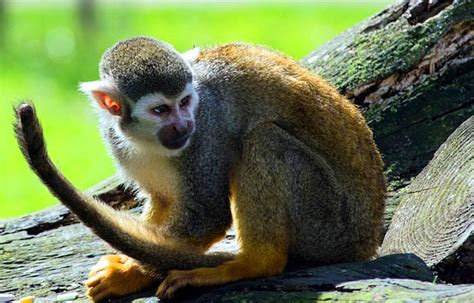 top  tropical rainforest animal adaptations biology