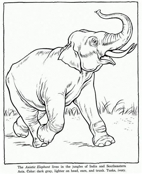 realistic elephant coloring page free printable elephant coloring pages for kids