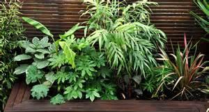 Hong Kong Sofa Urban Jungle Garden Design Clapham London Bamboo